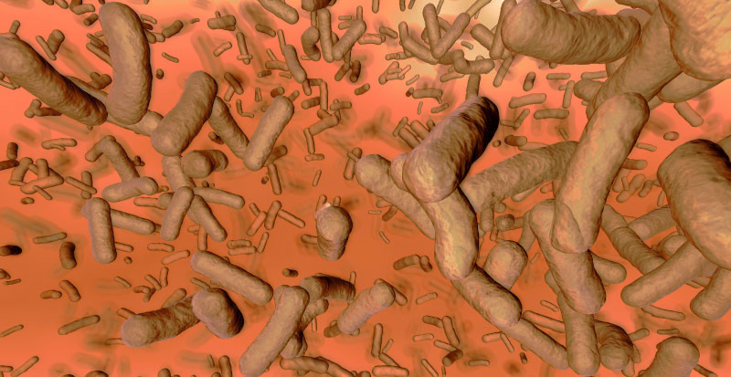 The Gut Microbiome and PCOS (Polycystic Ovary Syndrome)